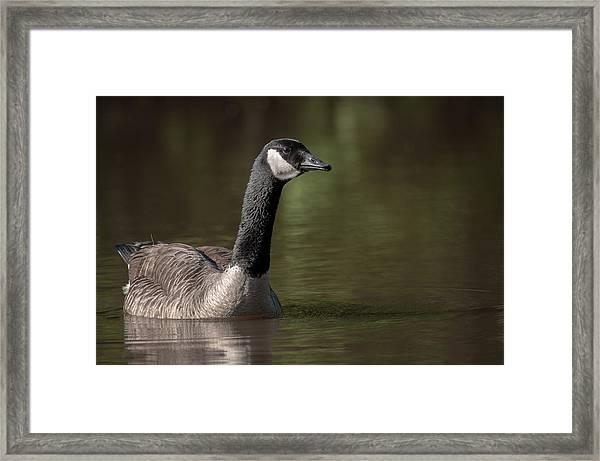 Goose On Pond Framed Print