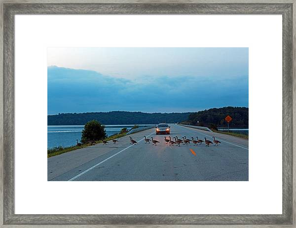 Goose Rush Hour Framed Print