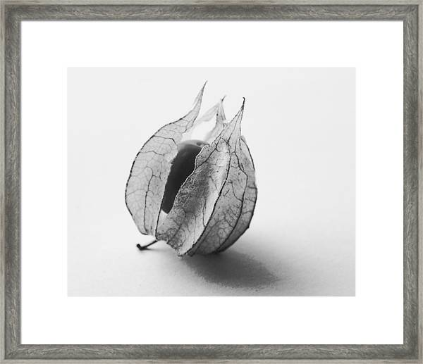 Gooseberry In Black And White Framed Print