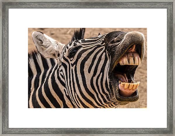 Got Dental? Framed Print