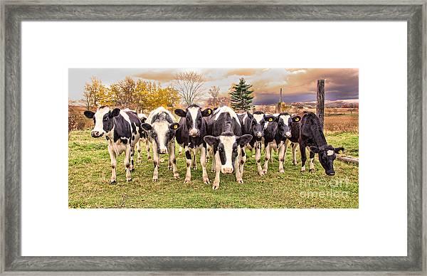 Got Grain? Framed Print