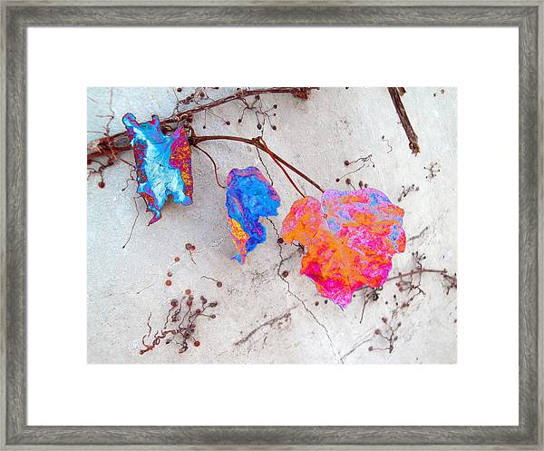 Grace And Beauty In Passing Framed Print