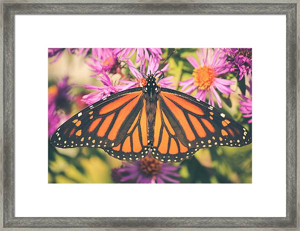 Grace And Beauty Framed Print
