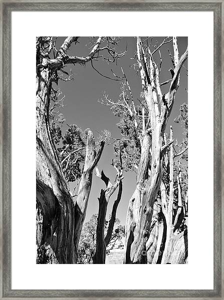 Grand Canyon Trees Framed Print