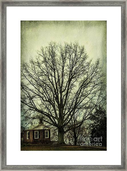 Grand Old Tree Framed Print