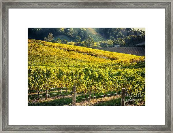 Grape Expectations Framed Print