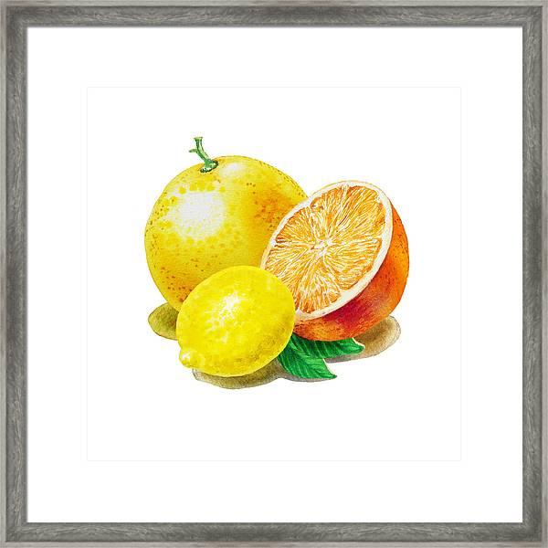Grapefruit Lemon Orange Framed Print