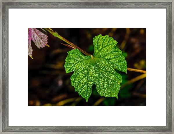 Grapes Of Rath Framed Print