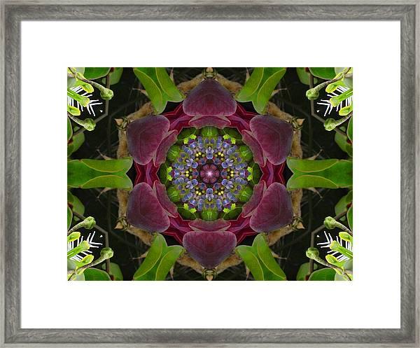 Grapevine Portal Mandala Framed Print