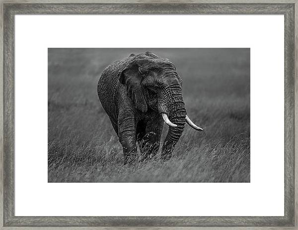 Graphite Framed Print by Massimo Mei