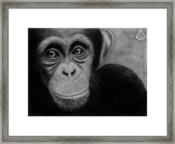 Grapofica Framed Print