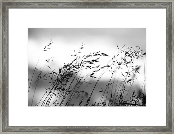 Grass On Mount Iwaki Framed Print