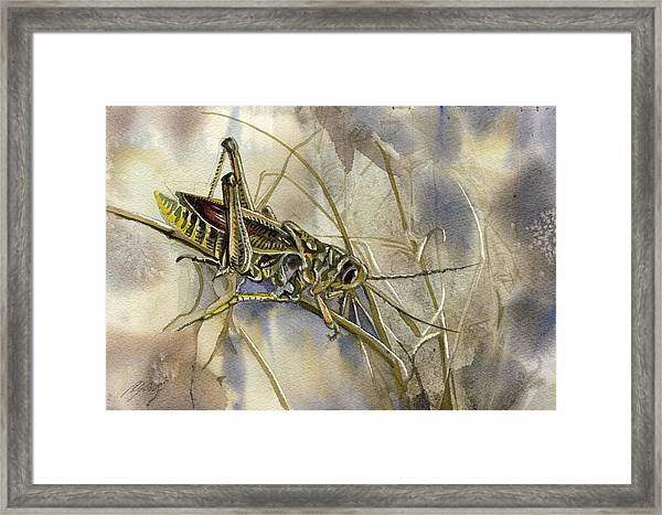 Grasshopper Watercolor Framed Print