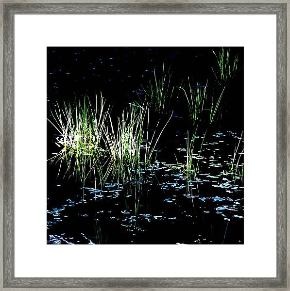 Grassy Lights Framed Print