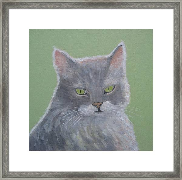 Cat With Green Eyes  Framed Print