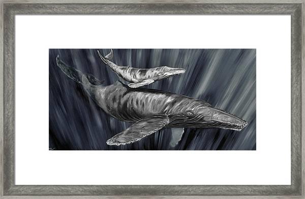 Gray Whales Framed Print