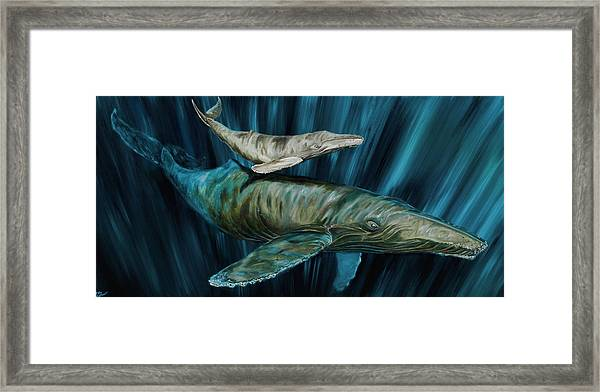Graywhale Momma And Calf Framed Print