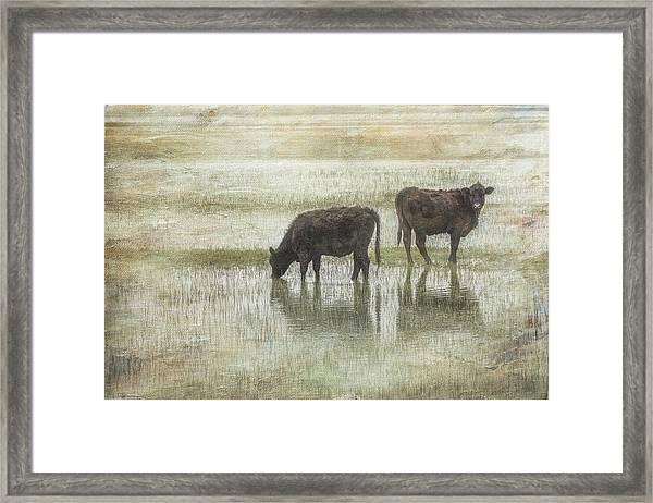 Grazin In The Pond Framed Print by Ramona Murdock