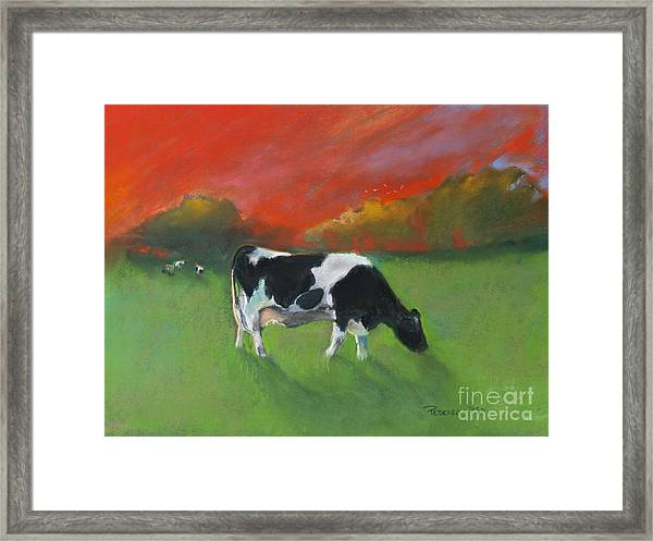 Grazing Cow Framed Print