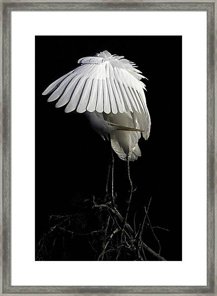 Framed Print featuring the photograph Great Egret Bowing by William Jobes