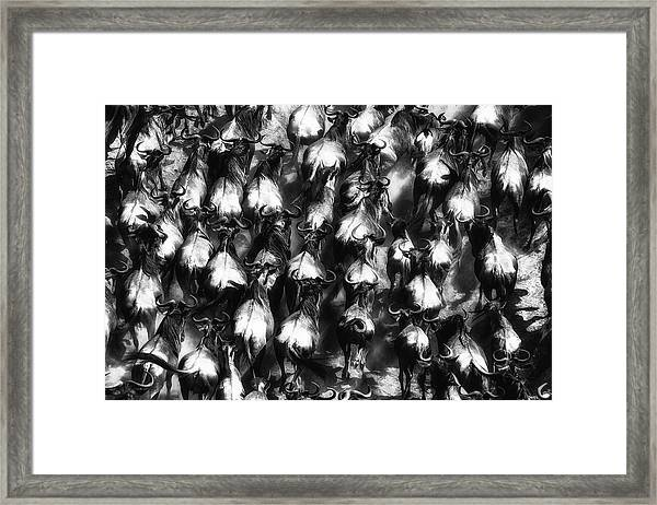 Great Escape Framed Print