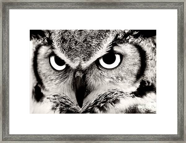 Great Horned Owl In Black And White Framed Print