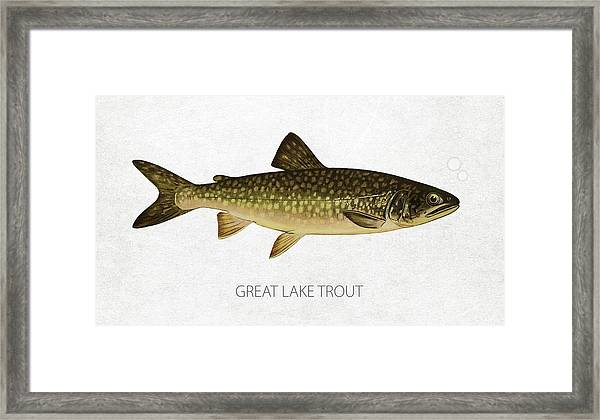 Great Lake Trout Framed Print
