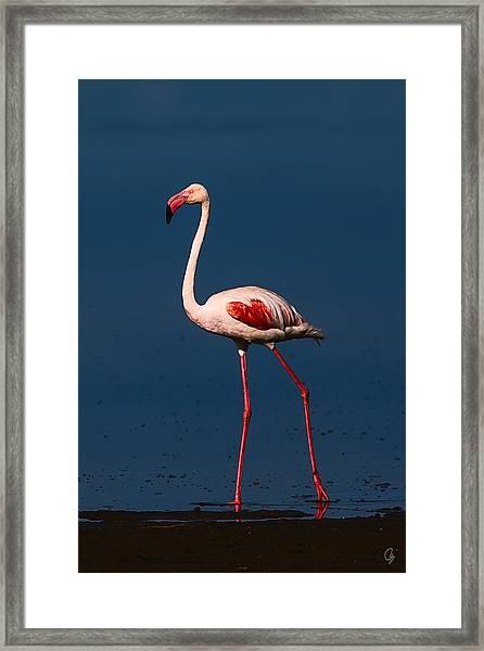 Great Morning Beauty Framed Print by Jeppsson Photography