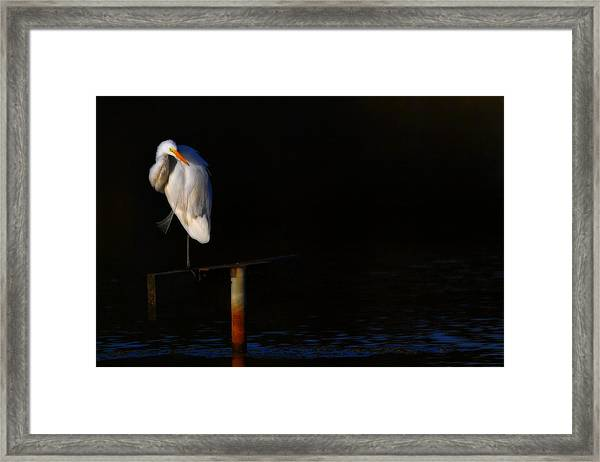 Great White Evening Framed Print