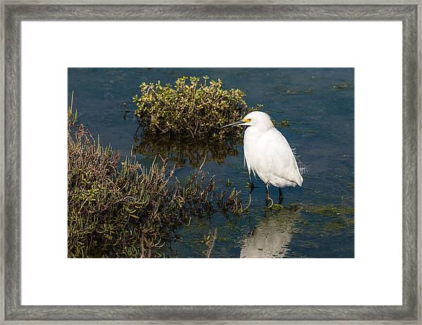 Great White Hunter Framed Print