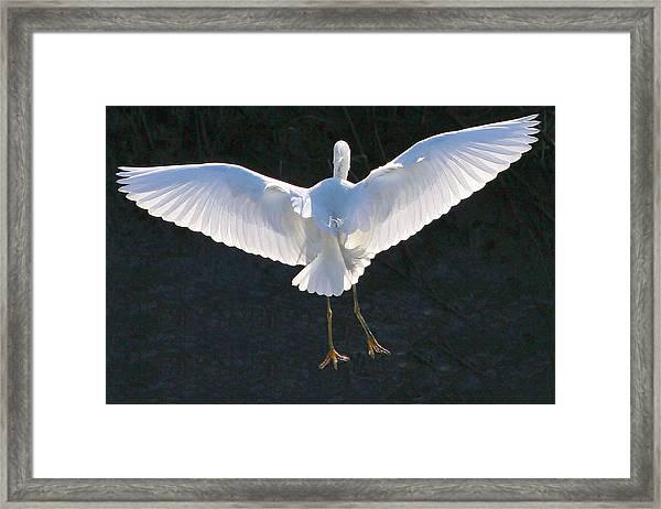 Great White Landing Framed Print