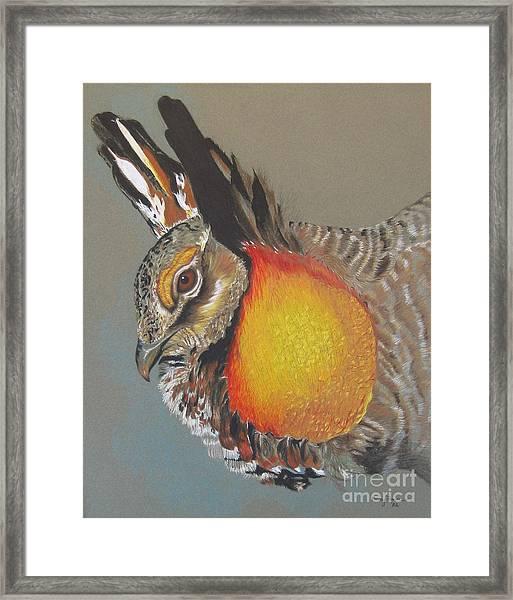 Greater Prarie Chicken Framed Print
