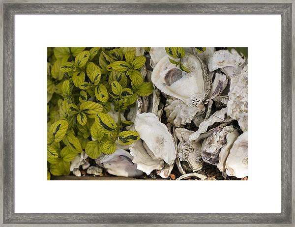 Green Abalone Framed Print