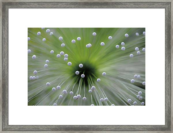 Green And White II Framed Print