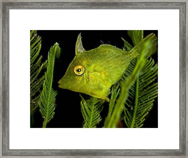 Green Beauty Framed Print