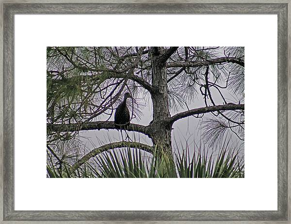 Green Cloudy Framed Print