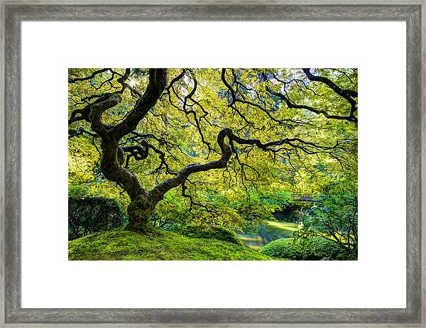 Framed Print featuring the photograph Green by Dustin  LeFevre