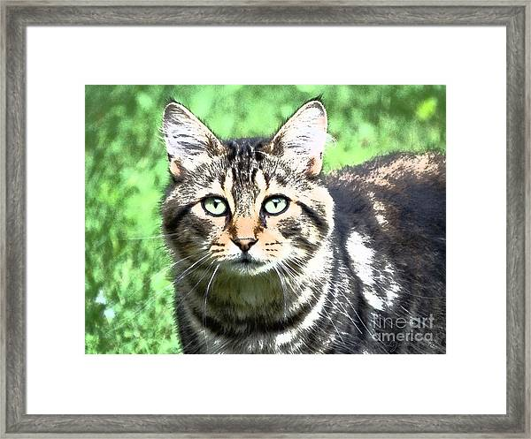 Green Eyed Cat Framed Print
