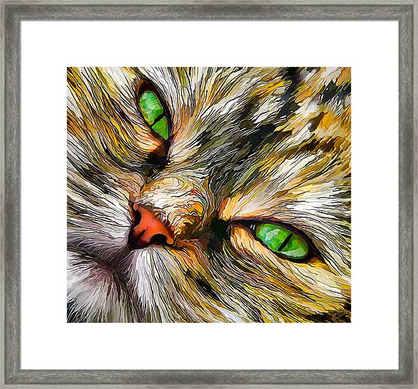 Green-eyed Tortie Framed Print