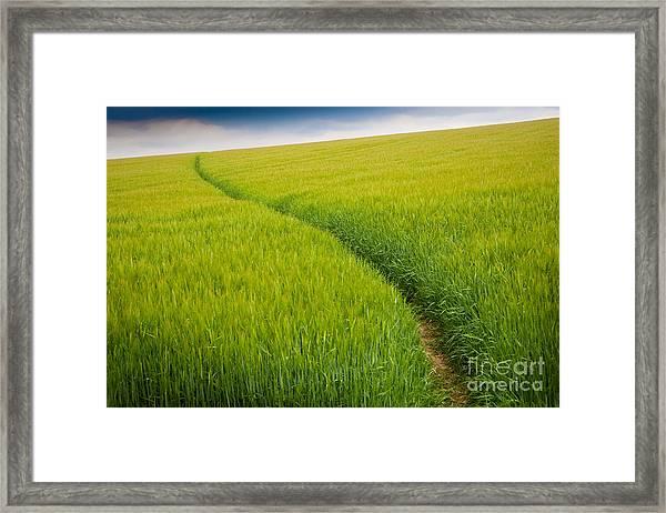 Green Field Framed Print by Michael Hudson