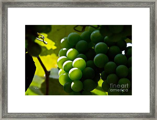 Green Grapes Framed Print