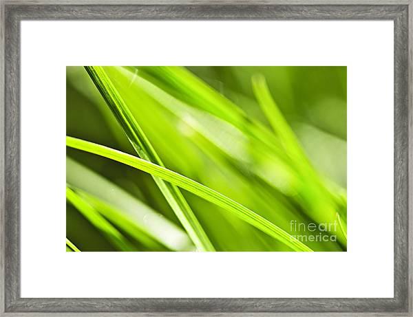 Green Grass Abstract Framed Print