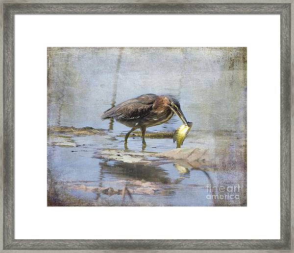 Green Heron More Than A Mouthful Framed Print