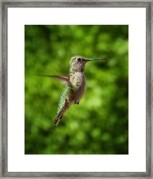 Green Hummingbird Framed Print