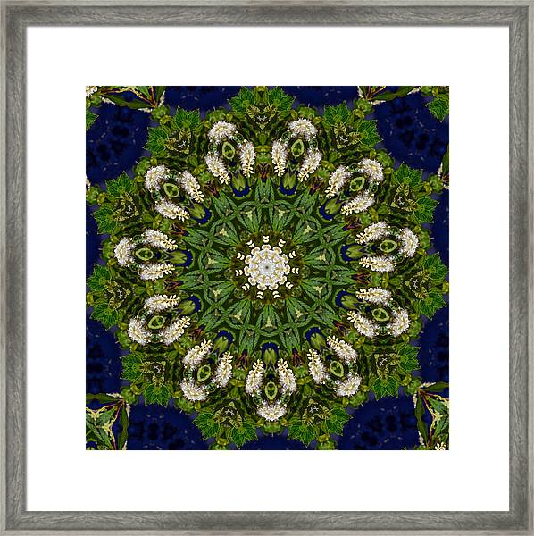 Framed Print featuring the photograph Green Leaf White Flower Mandala by Beth Sawickie