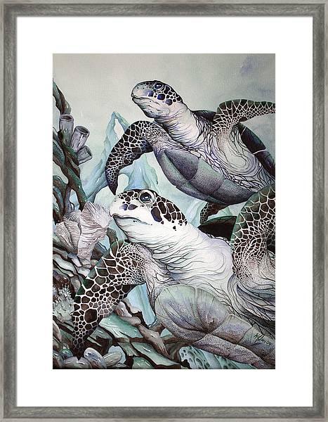 Green Loggerhead Framed Print