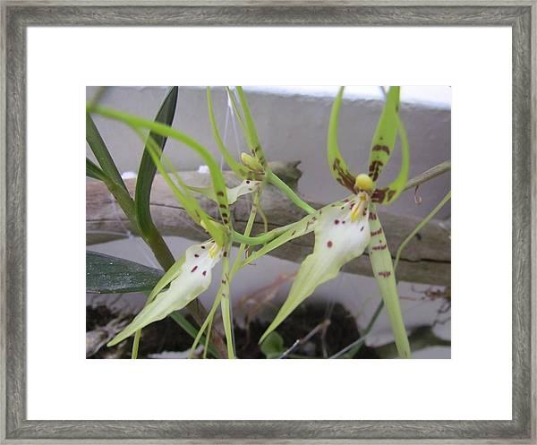 Green Orchard Framed Print