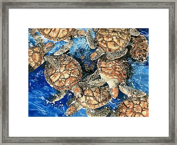 Green Sea Turtles Framed Print