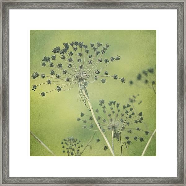 Green Seeds Framed Print by Rani Meenagh