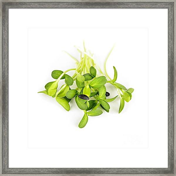 Green Sunflower Sprouts Framed Print